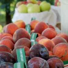 20 Valley Farmer's Market